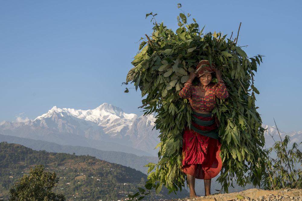 Nepal - Mark Cunich