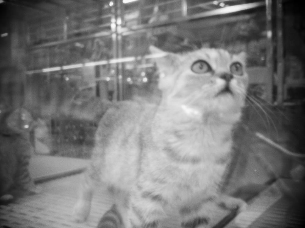 crazy kitty_5163998210_o.jpg