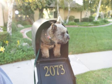 Bru waiting for the mail.jpg