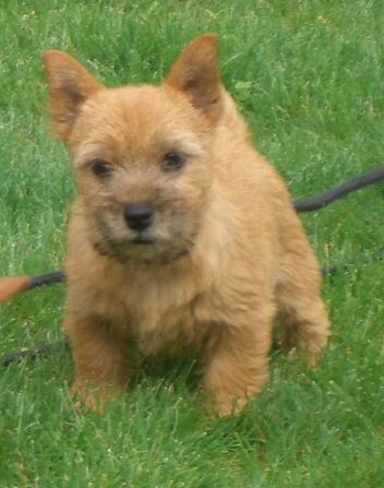 Puppy 4 mo.jpg