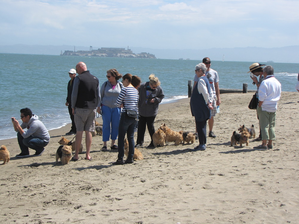 Walking at Crissy Field 2014.jpg