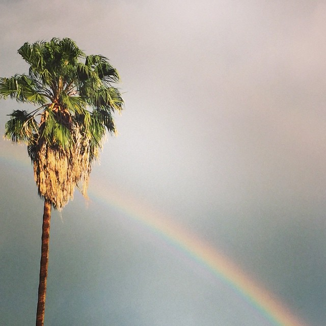 The Palm Tree and the Rainbow #losangeles #california