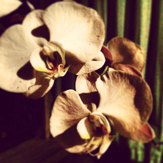 Orchids, just beautiful! #thebaliedit