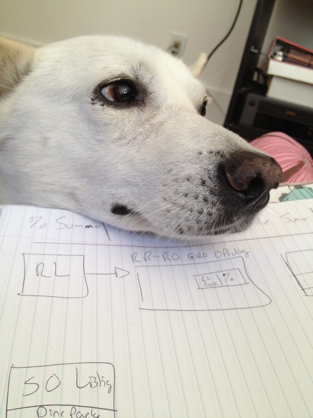 My dog Calvin helps me figure out some customer flows.