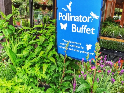 Pollinator Plants - Feed the bees!