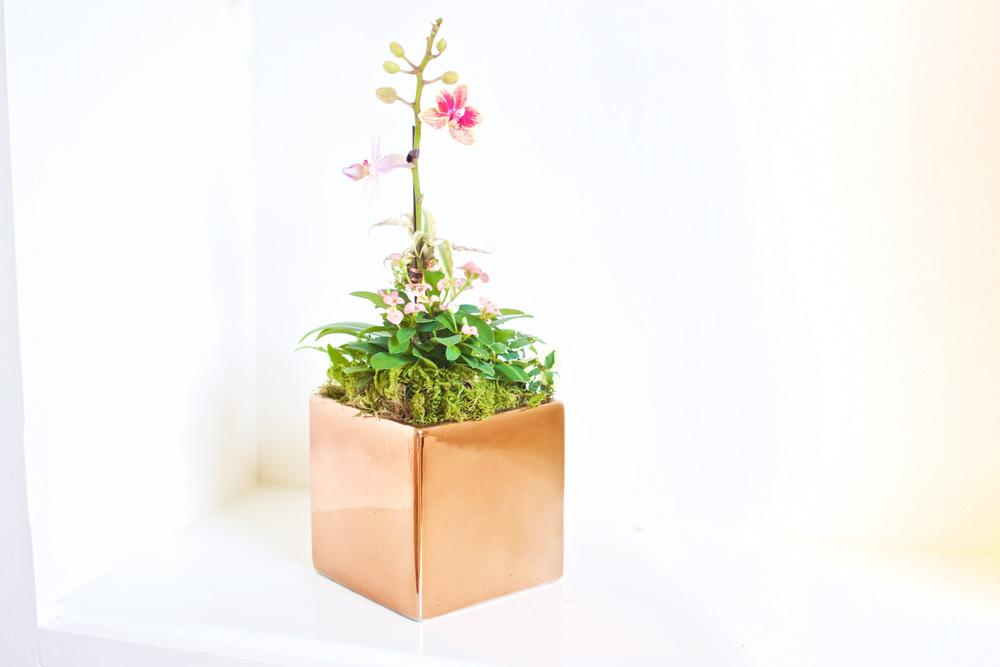Houseplant arrangement 2.jpg