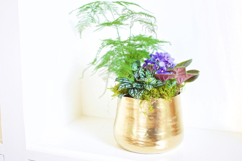 Houseplant arrangement.jpg