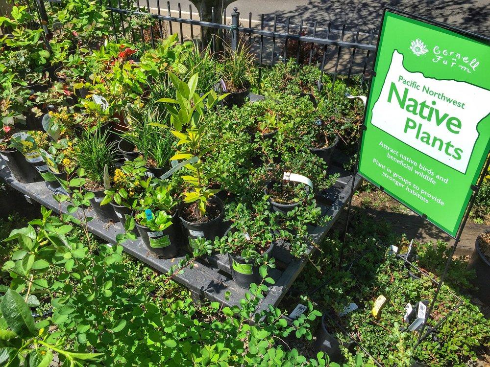 Nativ Plants at Cornell Farm3.jpg