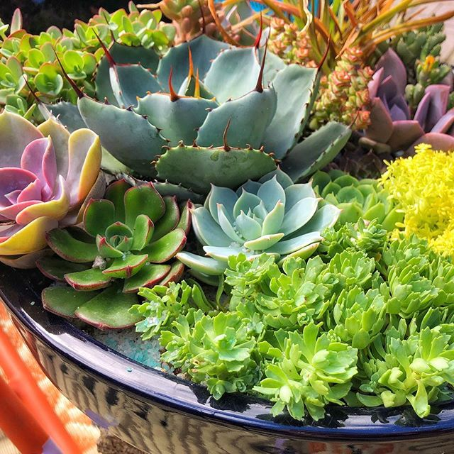 Succulent Q&A - 5-6pm this Sunday, July 15. Bring your questions!