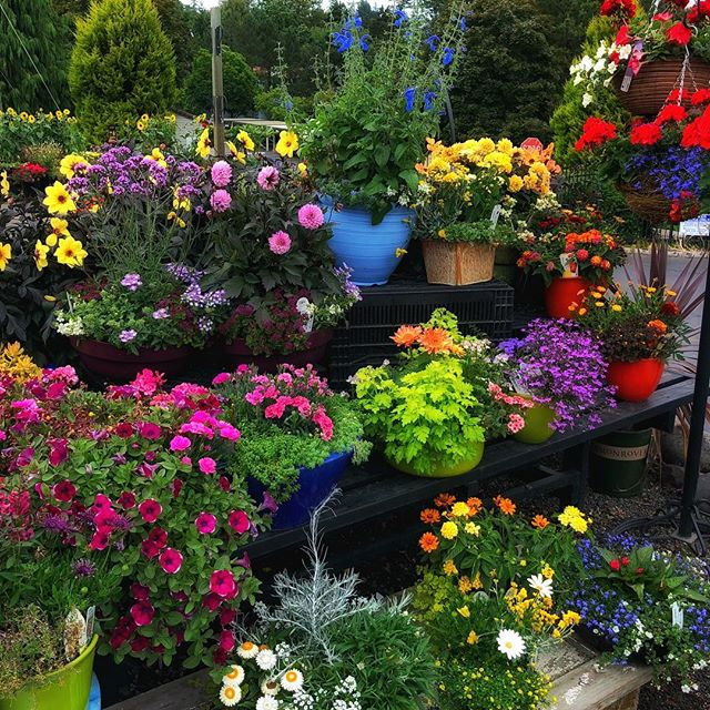 The quickest way to brighten up your porch, balcony, or entry: our designer potted gardens! 💐