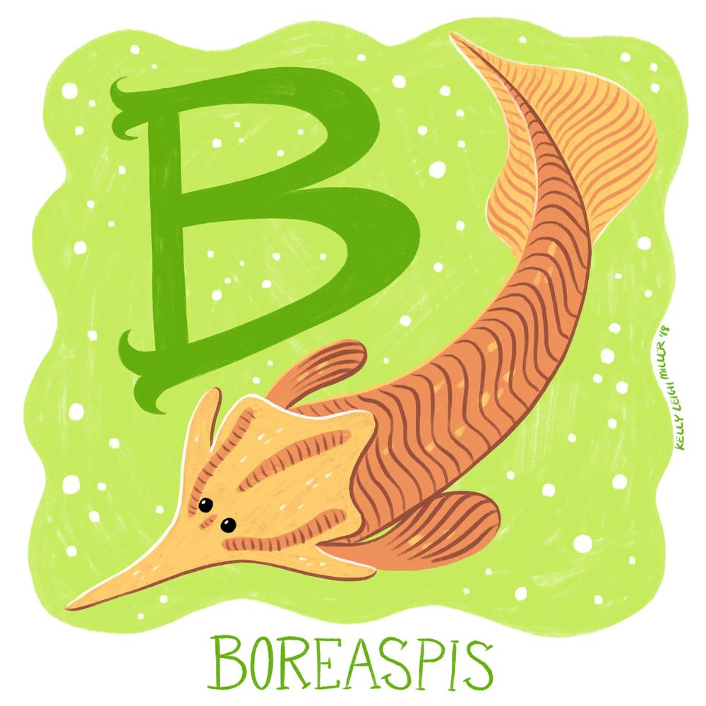 B-Boreaspis.png