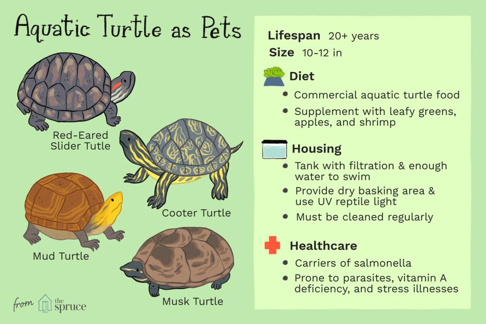 Pet_Aquatic_Turtles_1237254_v2.png