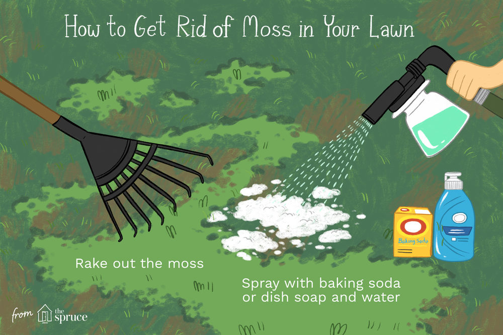 how-to-get-rid-of-moss-in-lawns-2132201_FINAL.png