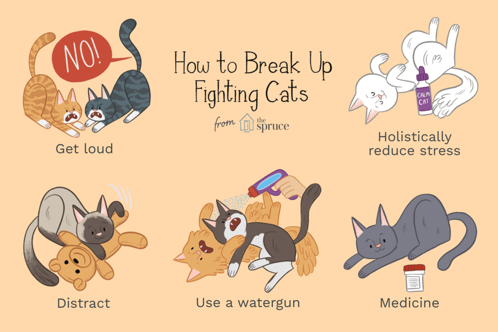 aggression-between-family-cats-551794_FINAL.png