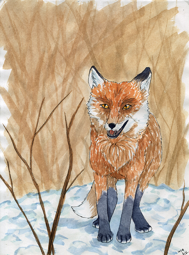 Watercolor ink fox_SM.jpg