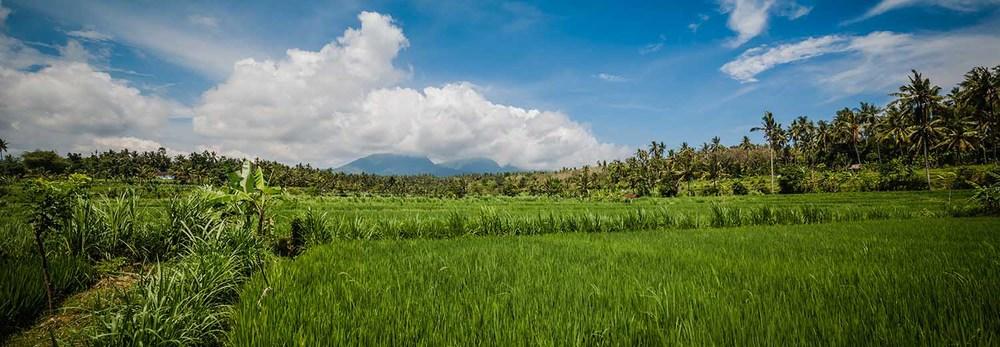 Bali 7 - Teo Morabito.jpg