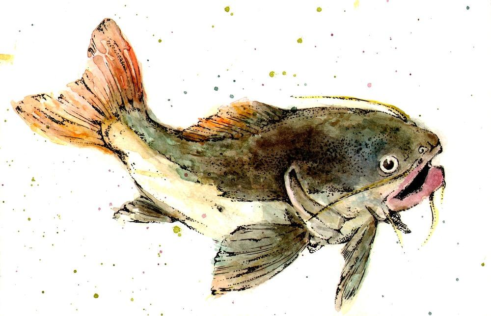 catfishy - Copy.jpg