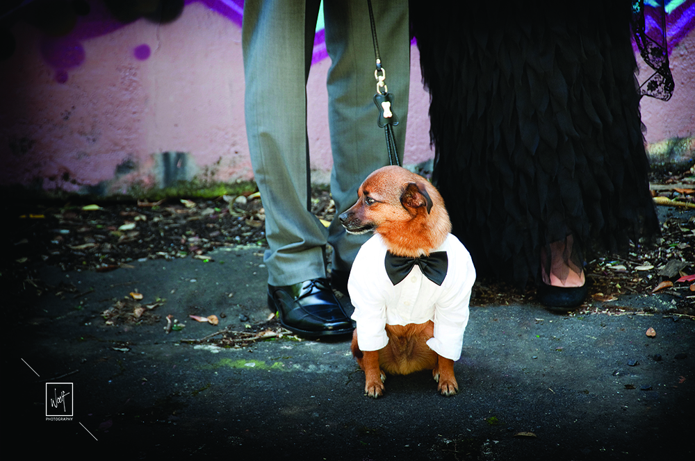 Wedding pets photos