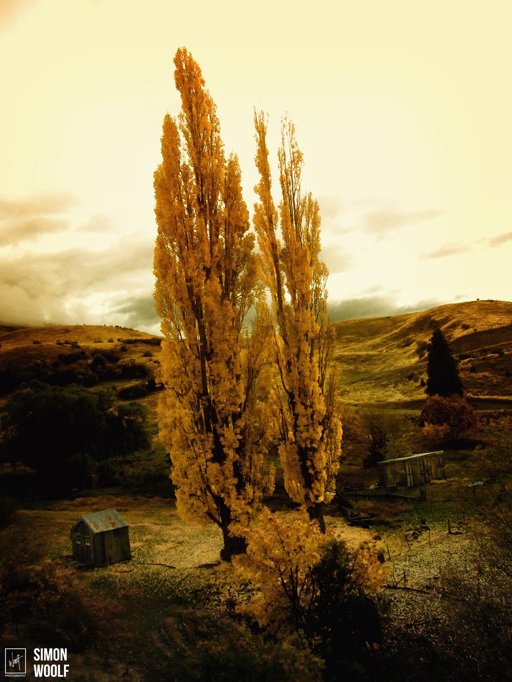 Autumn Cardrona IMG_9621.jpg