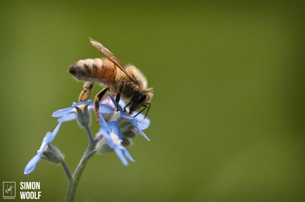 Bee_63D9688.jpg