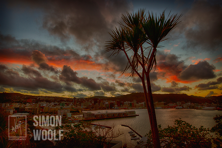 #3138, Cabbage Tree and City