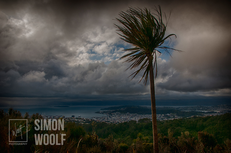 #3144,Storm and Cabbage Tree