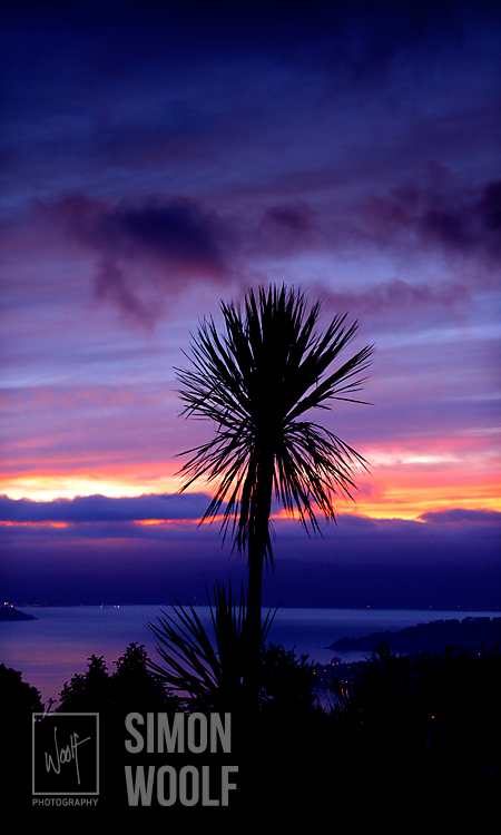 #3136-7756, Bruce and Simon's Cabbage Tree