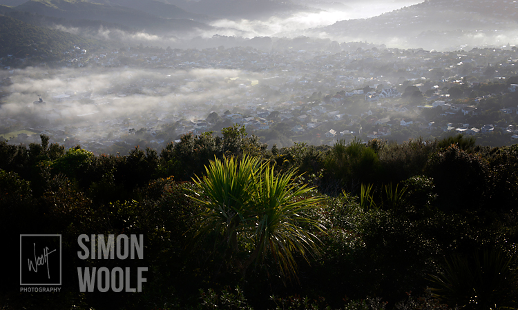 #3158, Cabbage Tree, Mist and Karori