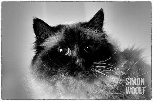 closeup-cat-blackandwhite-headshot-studio-woolf-photography-oct15.jpg