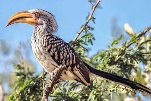 Mabalingwe birdlife