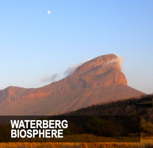 <p>Revel in the beaty of the bushveld and its rich wildlife heritage.<a href=/phumula>More →</a></p>
