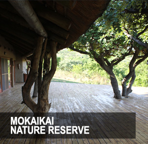 <p>Experience the beauty of nature on the patio of your own private game lodge.<a href=/mabula>More →</a></p>