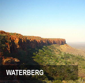 <p><strong>WATERBERG</strong>286 hectare Farm near Marnitz. <br>PRICE - R4.95M <a href=/reserve>More →</a></p>