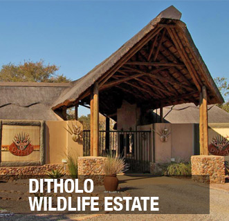 Ditholo Wildlife Estate