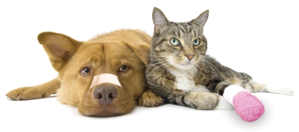 Pet First Responder — Maow Care - Cat Sitting | Behavioural Therapy ...