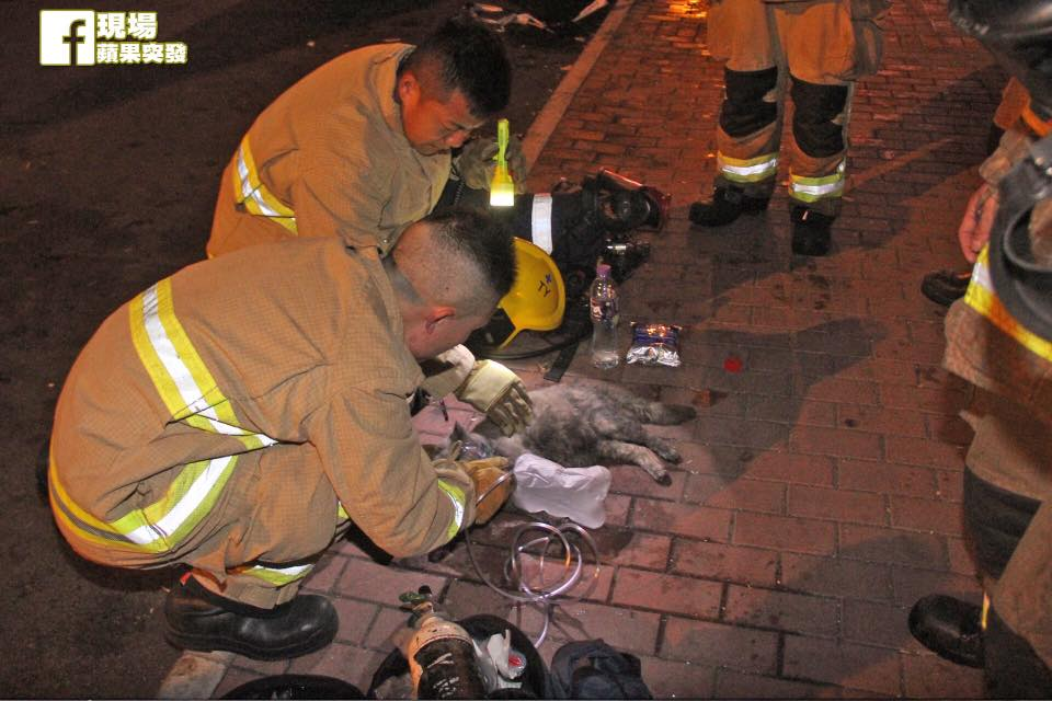 Firefighters in Hong Kong performing CPR on a cat during a fire rescue - Apple Daily 16 February 2017