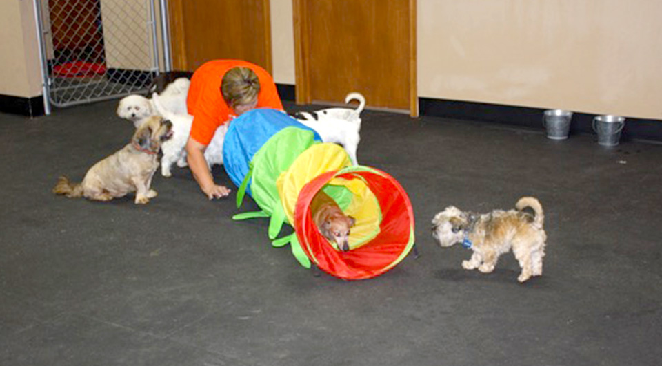The Dog House OKC Indoor Play