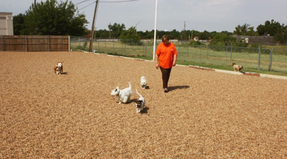 Sherry our pack leader loves all dogs. She is an advocate for cage-free play and her spacious facility offers 6,000 square feet of indoor/outdoor play space for your dog.