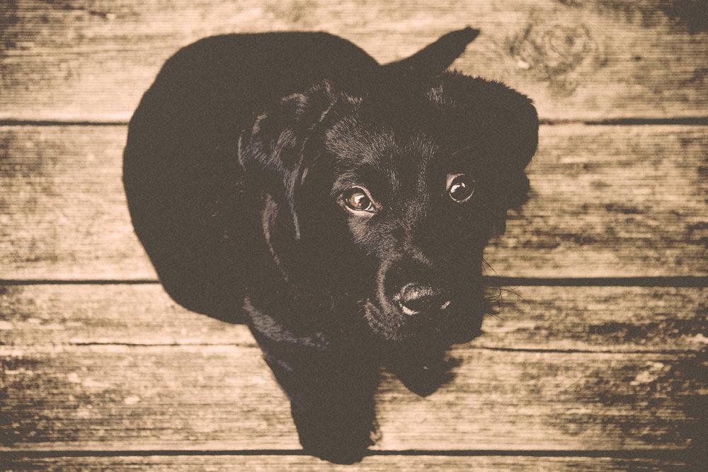 the-dog-house-okc-black-lab-dog-daycare.jpg