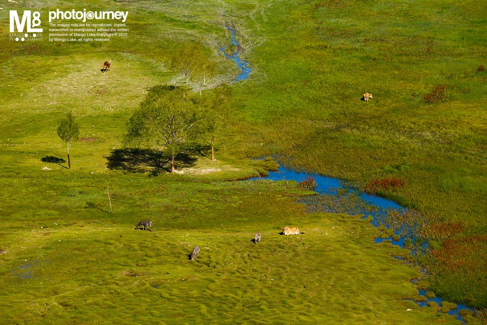 """自然与和谐.The Natural Harmony 印度. India.2013CANON1DX 70-200MM F2.8L 1/500 F8.0ISO320 在印度Leh郊外以南十五公里处有一寺庙Shey Monastry. 在寺庙正前方有一湖叫做圣鱼湖Holy Fish Pond. 此圣鱼湖非常小,""""圣鱼""""不多,只有几条隐隐约约在湖里漫游, 小湖中竖立了一个残旧的名牌,湖边杂草丛生。在平地看过去这只是一个平平无奇而且还有少许荒废的小湖 何以称为Holy Fish Pond?我真是不解. 然而,当我爬上了Shey Monastery最高处. 由高角度的方向望下, 平平无奇的Holy Fish Pond却让我看见了另一番面貌. 湖水的支流反映着天空的深蓝,犹如画笔画过哪看似苲草丛生却青绿的草地 草地上有几只零散悠游放牧的黄牛与灰棕色的驴子 位置正好围着草地中的一棵大树,形成一个圈的形状 加上带着棕红的水草,红黄蓝青的主色都齐全了 多么自然和谐的一副画面啊:) 凡是都有两面,试着换个角度,看似荒废的可能也有其美丽的一面. 摄影如此,做人如此也."""
