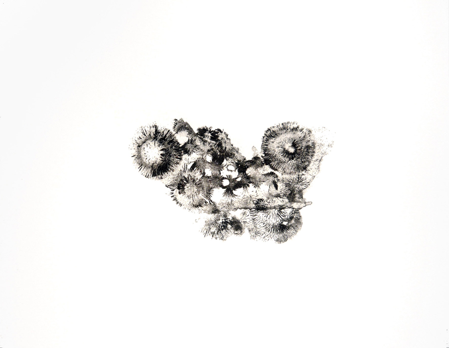 Limaille fossilisée 5  , 2011. P  oudre de fer, vernis sur papier \ varnished iron powder.  50 x 65 cm