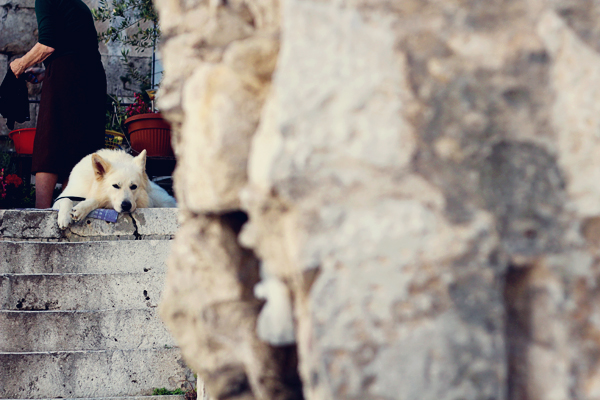 Split Croatia dog
