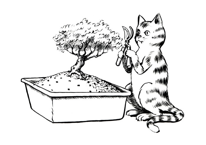 Bonsai Cat