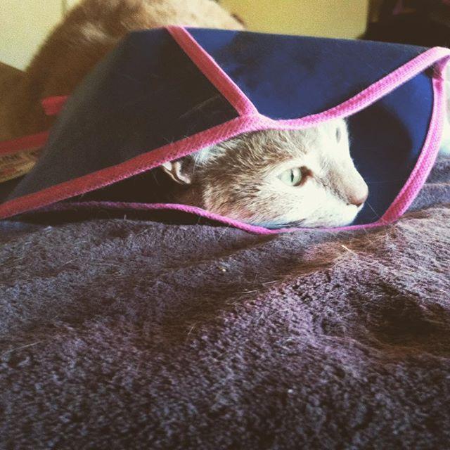 Keekadookie (AKA Keek)(AKA RUBA Cat) underwent surgery this week but he's fine! He will be resting away from the spotlight for the next few months. #ninelives #ruba #cats #catstagram #rubacat #keekadookie