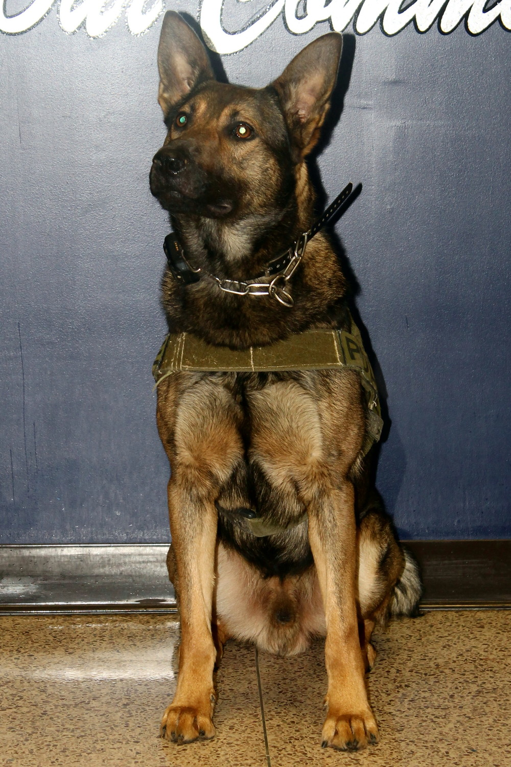 K-9 Warro, New Albany's newest officer.