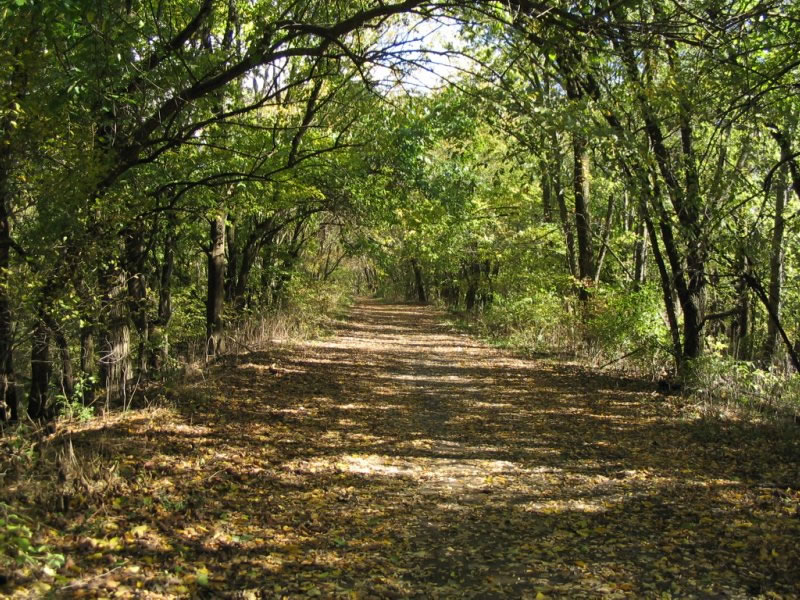 A nature trail alongside the Loop Island Wetlands. Photo by Al Goodman.