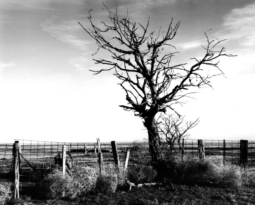 Bare Tree and Tumbleweeds