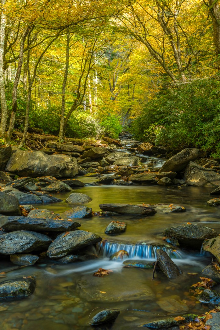 Mountain Stream in the Smokies