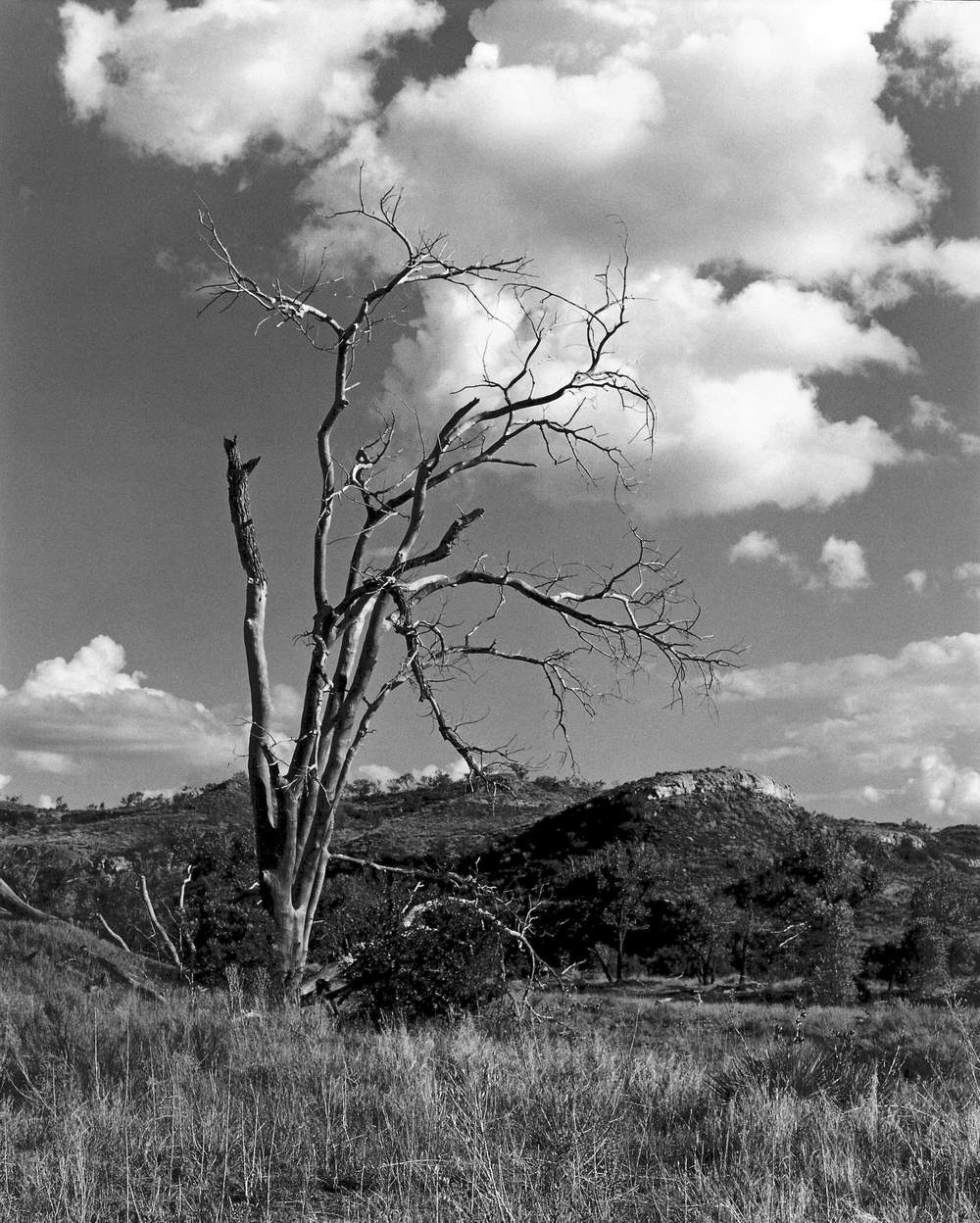 Dead Tree at Plum Creek