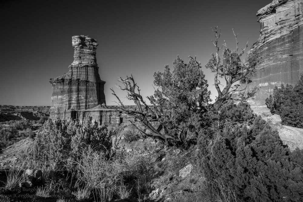 The Lighthouse and Juniper Trees